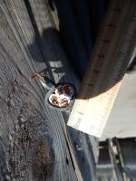 Фотография медного кабеля ВВГнг 3х25+1х16 с тремя основными и одной дополнительной жилами