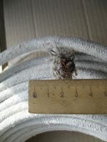 Фотография нагревостойкого провода ПАЛ 25 с одной медной жилой в асбестовой изоляции и оплётке из асбестовой пряжи