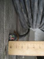 Фотография сечения медного контрольного кабеля КВВГнг-LS 4х4 для групповой прокладки в общественных помещениях